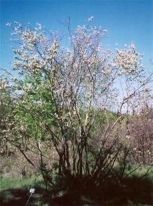 Honeywood saskatoon